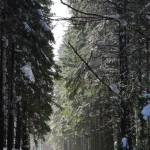 Průchod dešťovým lesem - Kněhyně